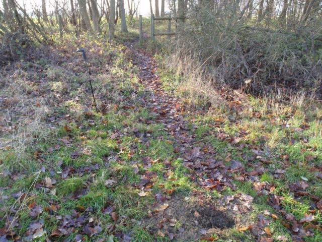 Essex - High Wood